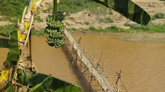 Bellevue Bungalows : Bambusbrücke