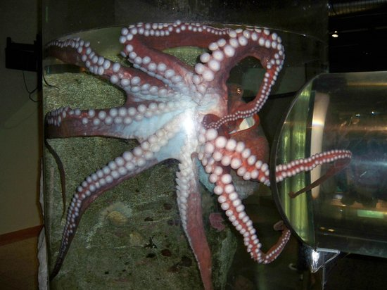 Touching Picture Of Seattle Aquarium Seattle Tripadvisor