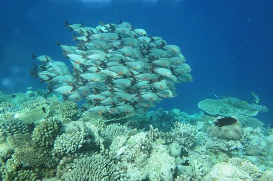 Veligandu Island Resort & Spa: Fishes