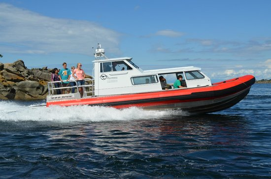 Discovery Seatours: whale watching, historic Lighthouse/Saturna Winery tours from Gulf Islands, White Rock BC