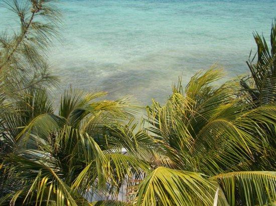 Thatch Caye Resort : water view