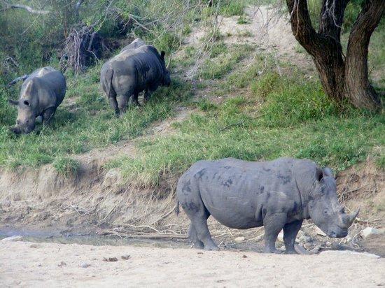 Nyala Safari Lodge: white Rhinos