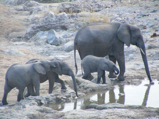 Nyala Safari Lodge: from the viewing deck...