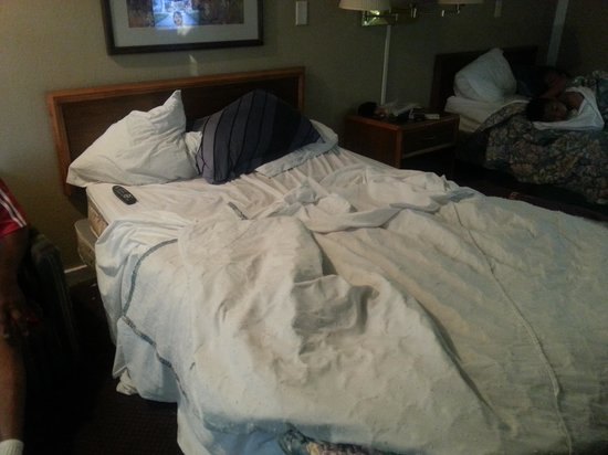 Knights Inn Indianapolis Airport South: dirty beds