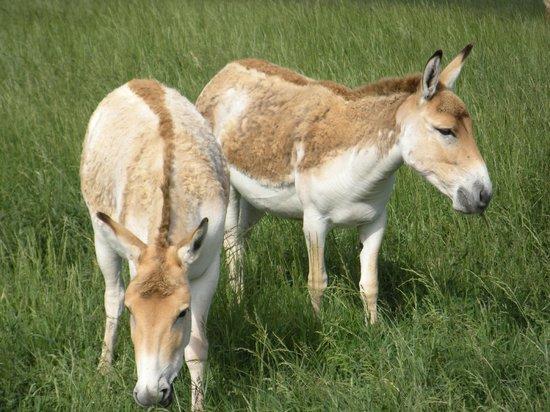 The Wilds: Open-Air Safari