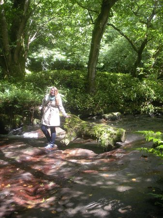 Kilfane Waterfall and Glen : The walk takes you from manicured lawns with sculpture thru pretty woods and along lovely paths