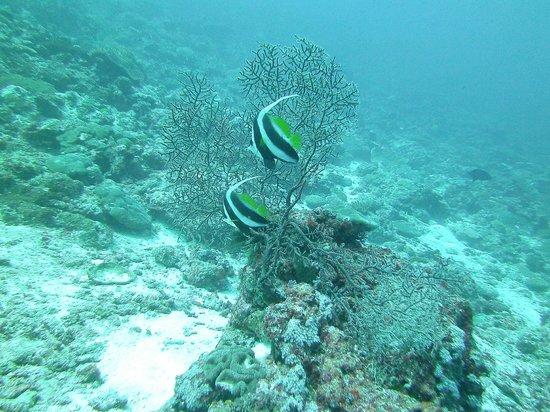Dive Munda : Fish