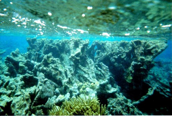 Jungle Water Adventures : Amazing coral formation at Mexico Rocks