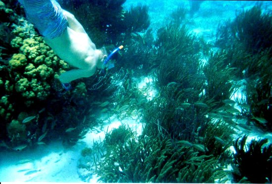 Jungle Water Adventures : Mexico Rocks snorkeling!
