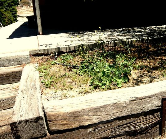 Pyramid Lake RV Resort: Weeds in place of nice plants