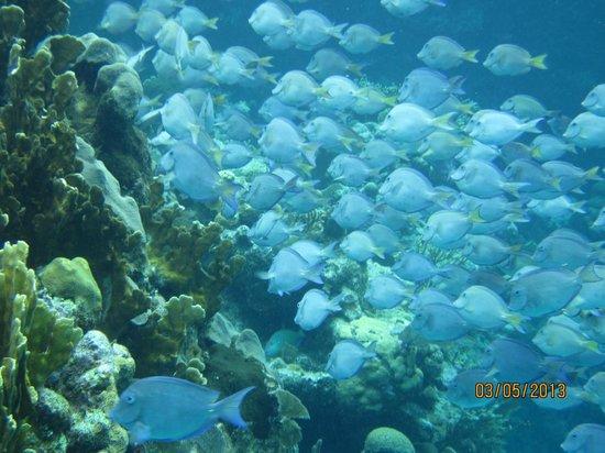 Bananarama Beach and Dive Resort: Snorkeling was amazing