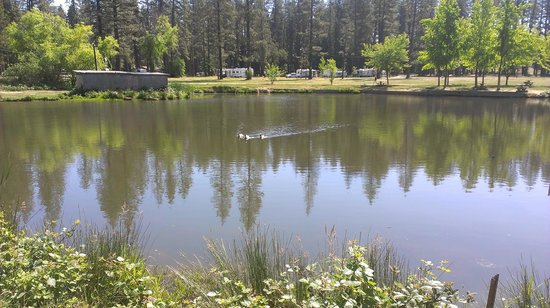 Nevada County Fairgrounds Camping : Pond at Campground