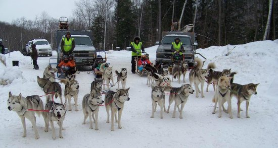 Valley Snow Dogz: Hooking up the teams at Loon Mtn Resort for their seasonal kidz event