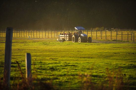 McMillan Farms: Hayrides across the fields