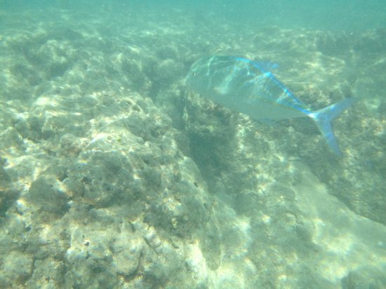 Snorkeling picture of hanauma bay nature preserve for Fishing spots oahu
