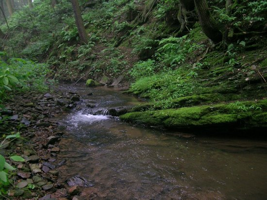 The Peaceable Kingdom B & B: Stream along our Guest Nature Path