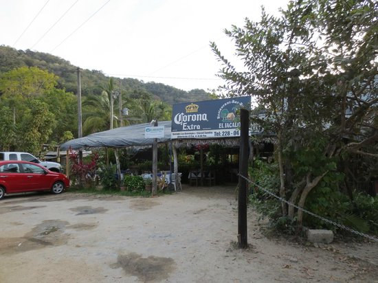 Barcelo Puerto Vallarta: Awesome lobster place on road just past resort