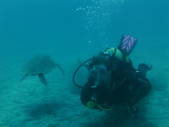 Easy Divers: playing with the turtles