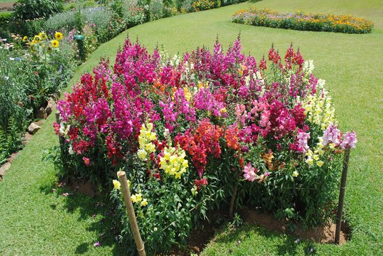 Victoria Park of Nuwara Eliya