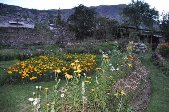 Hotel Agustos Urubamba: Décor fleuri