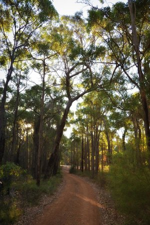 """Seclusions"" of Yallingup: Road into"