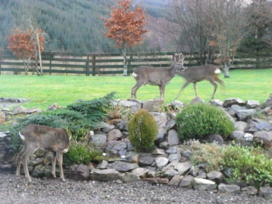 Bealach Country House: Frequent visitors to the garden
