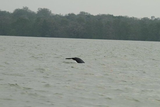 Kuching Wetlands National Park : Dolphin's flipper :-)