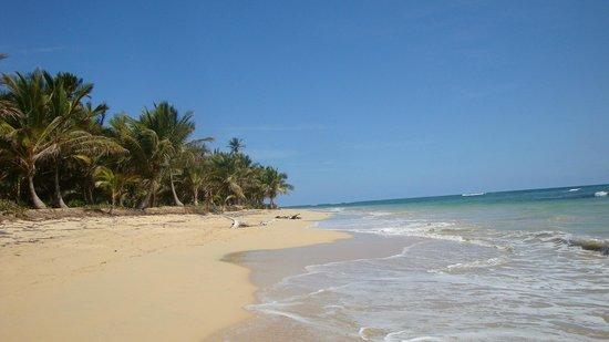 Sirenis Punta Cana Resort Casino & Aquagames: Strand