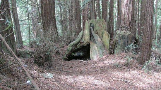 Forest of Nisene Marks State Park: Photo 3