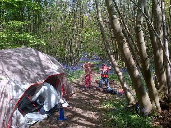 Welsummer Camping: Our campsite in the bluebell filled woods!