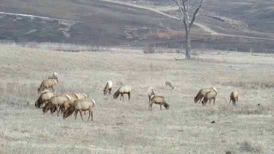 Neal Smith National Wildlife Refuge and Prairie Learning Center: Elk 1