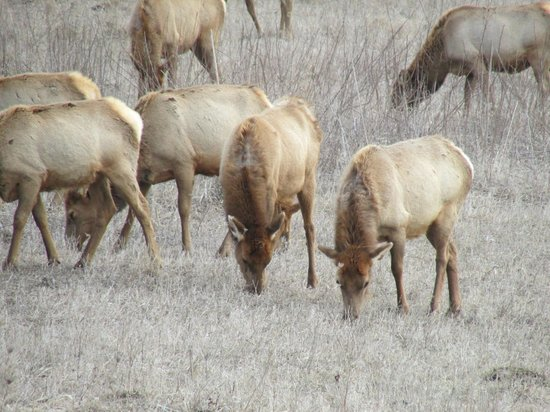 Neal Smith National Wildlife Refuge and Prairie Learning Center: Elk 2