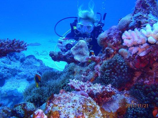 Tranquillity Island Resort & Dive Base: Resort Dive Site