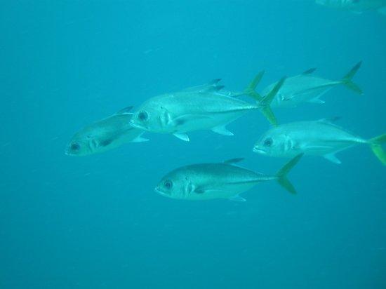 St. Thomas Diving Club: WIT Concrete fish