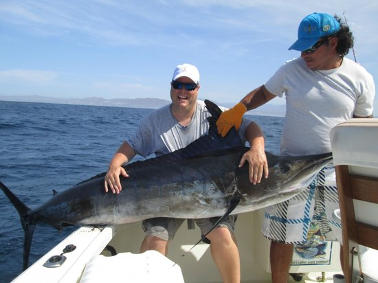 Big fish picture of pisces sportfishing cabo san lucas for Pisces fishing cabo