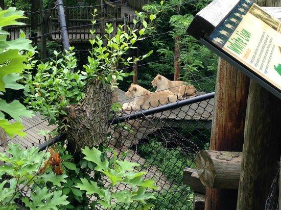 Orangutan Habitat Picture Of Cincinnati Zoo Botanical Garden Cincinnati Tripadvisor