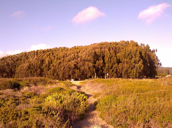 Costanoa Coastal Lodge & Camp: Looking from the outsite of the site.