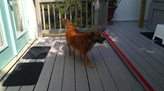 Cypress Creek Cottages: Other dog on patio