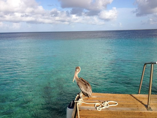 Bruce Bowker's Carib Inn : Dock at Carib Inn