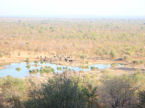 Victoria Falls Safari Lodge: view of water-hole