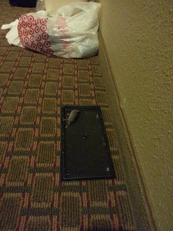 Quality Inn & Suites: Mouse found alive in room