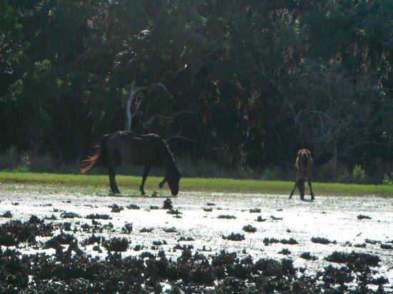 Cumberland Island National Seashore : We saw more wild horses than people