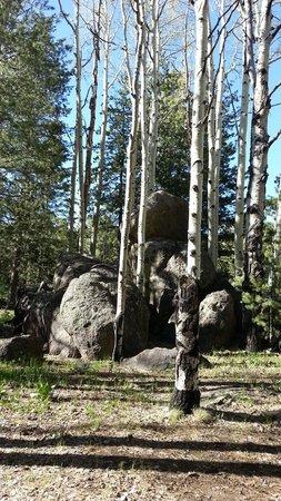 Humphrey's Peak: Aspens and huge monolithic boulders.