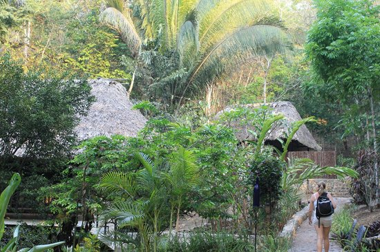 Table Rock Jungle Lodge: just a view from one of the paths