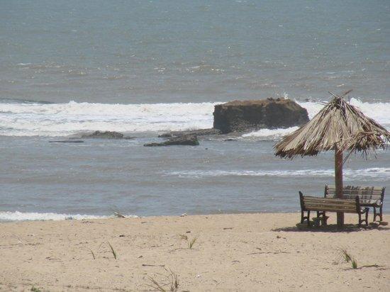 Hotel Palms : The Beach