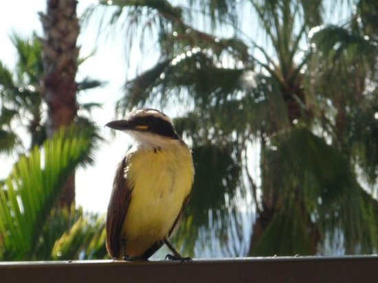 Jasmine Lounge: Lunchtime Visitor
