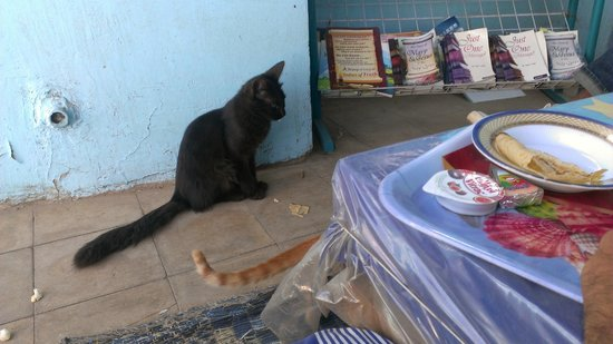 Oasis Hotel: Terrace with the cat who follows u every where