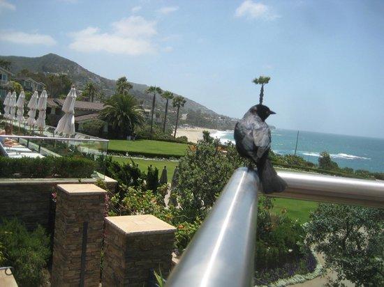 Montage Laguna Beach: From a birds few