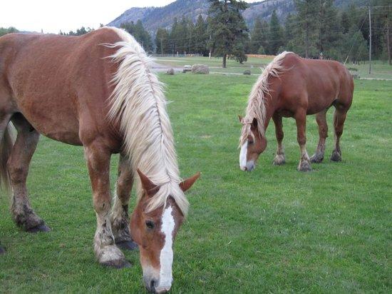K-Diamond-K Guest Ranch: Horses