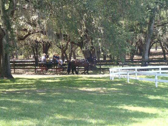 The Grand Oaks Carriage Museum